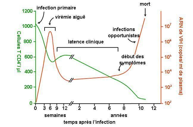 Evolution typique après infection par VIH-1